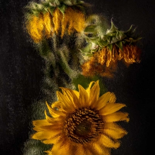 Glas 3 Sonnenblume VanGogh Kunst