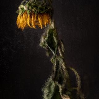 Glas 8 Sonnenblume verwelkt VanGogh